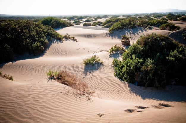 Dunas del desierto con ondasdesert dunes avec des vagues