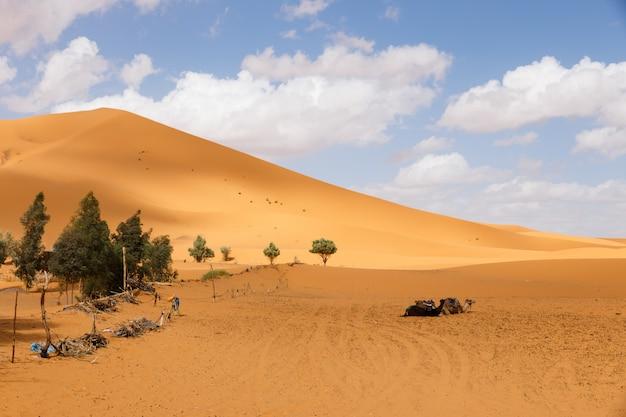 Dune de sable du sahara