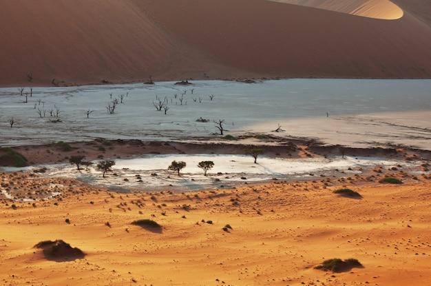 Dunes et acacias morts dans le désert du namib, dead vlei, sossusvlei, namibie, afrique. destination touristique célèbre
