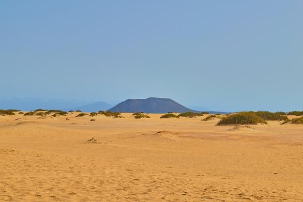 Dunes de corralejo avec végétation et pas