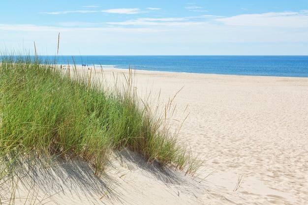 Dunes sur une plage ensoleillée près de la plage. été.