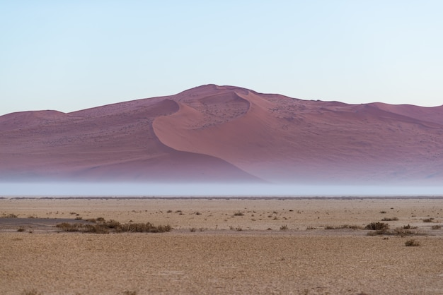 Dunes de sable dans le désert du namib à l'aube, voyage dans le magnifique parc national de namib naukluft, destination de voyage en namibie, afrique.