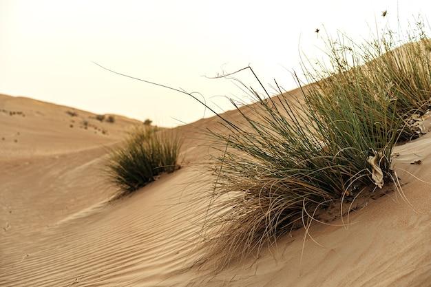 Dunes de sable jaune dans le désert de dubaï pour un arrière-plan