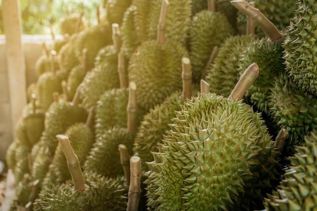 Durian avec des épines vertes, joliment aménagé et avec la lumière naturelle.