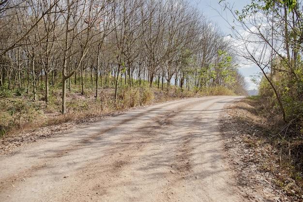 Dust road dans une campagne verdoyante
