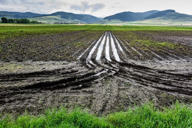 L'eau au milieu des cultures agricoles inondées