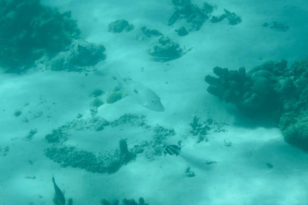 Eau bleu-vert sous-marine avec des poissons aquatiques
