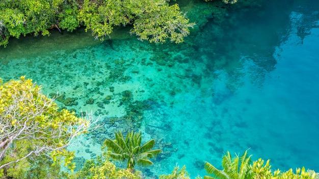 Eau bleue claire et corail dans la mangrove près de warikaf homestay, kabui bay, passage. gam island, papouasie occidentale, raja ampat, indonésie