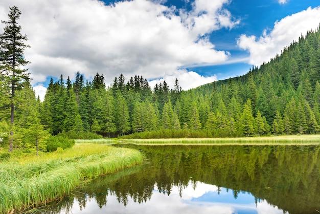 Eau bleue dans un lac forestier avec des pins