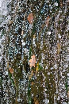 Eau de feuille de chêne sèche pulvérisée un peu rassis