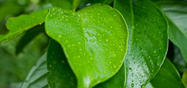 L'eau sur les feuilles