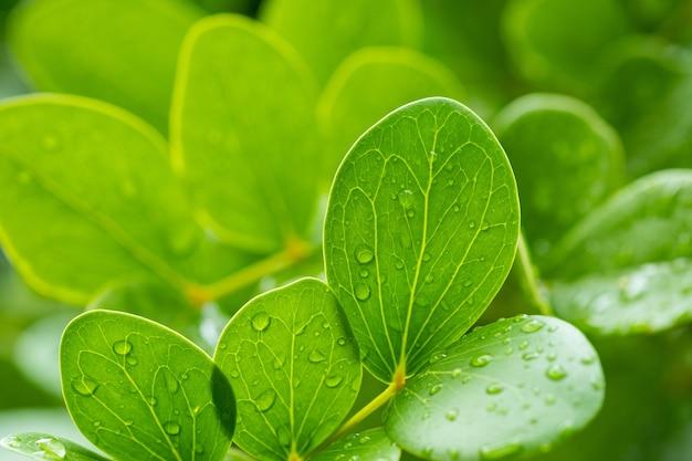 Eau sur fond de congé, nature feuille verte