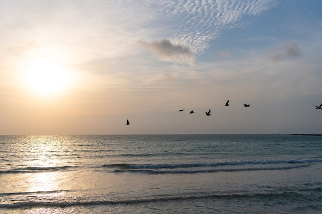 Eau de mer avec ciel coucher de soleil et silhouettes de mouette. lever de soleil doré de paysage marin sur la mer. notion de nature. beau crépuscule. plage de miami. tôt le matin, lever de soleil sur la mer.