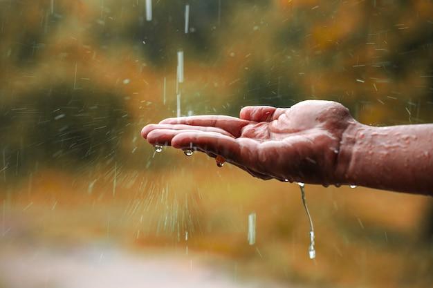 L'eau de pluie tombe à portée de main