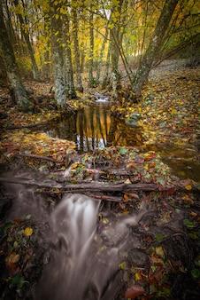 L'eau qui coule dans la forêt en automne