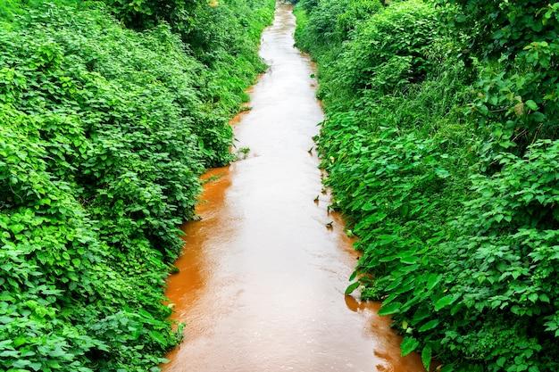L'eau qui passe entre les arbres verts qui couvraient