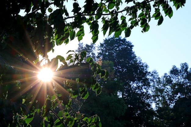 Éblouissant soleil du matin brille à travers le feuillage vert