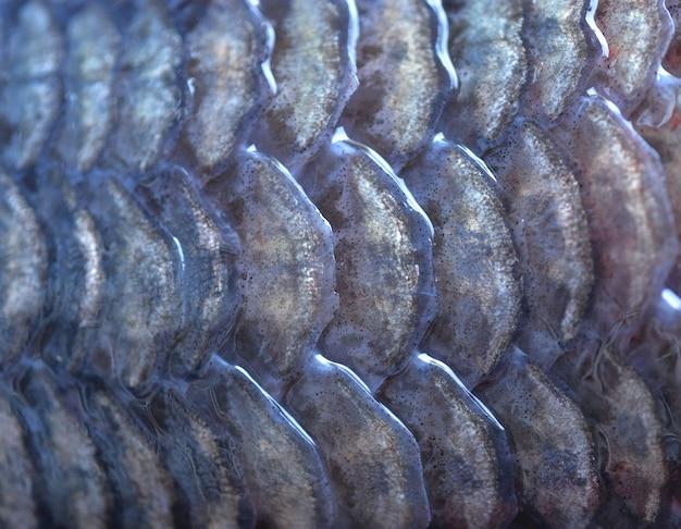 Écailles de poisson