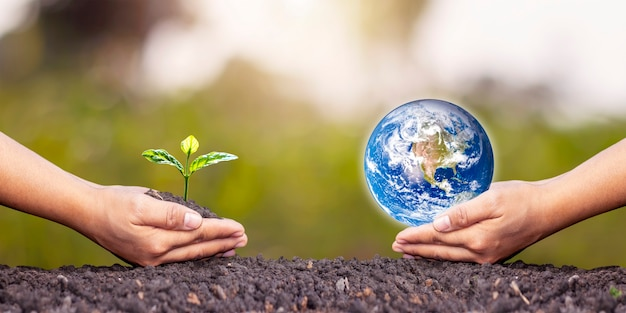 Échanger des planètes et des semis entre des mains humaines sur le sol