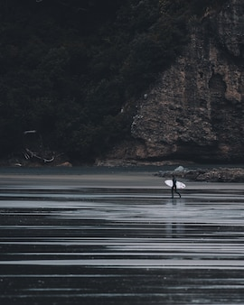 Échelle de gris verticale tourné une personne entrant dans l'eau avec un bureau de surf