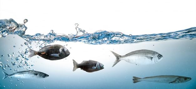 Éclaboussure d'eau avec du poisson sur blanc