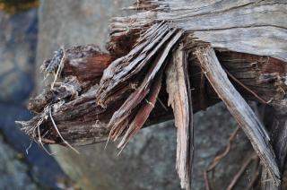 Éclats de bois texturé