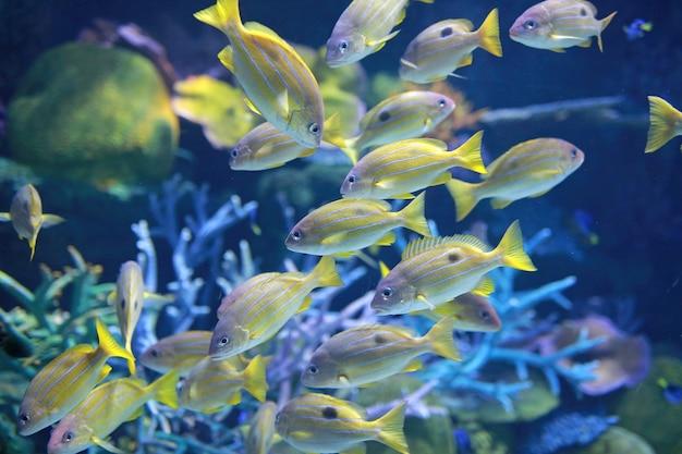 École de poisson