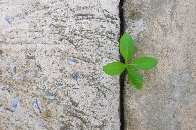 Ecologie des arbres et de la sécheresse de l'environnement sur une rue fissurée