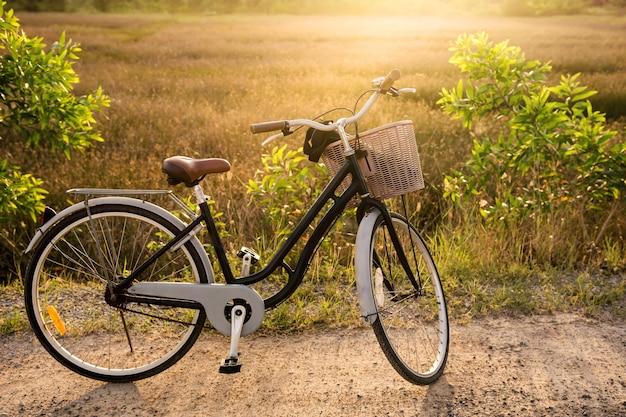 Écologie voyager à vélo, faire du vélo dans la nature matin d'été