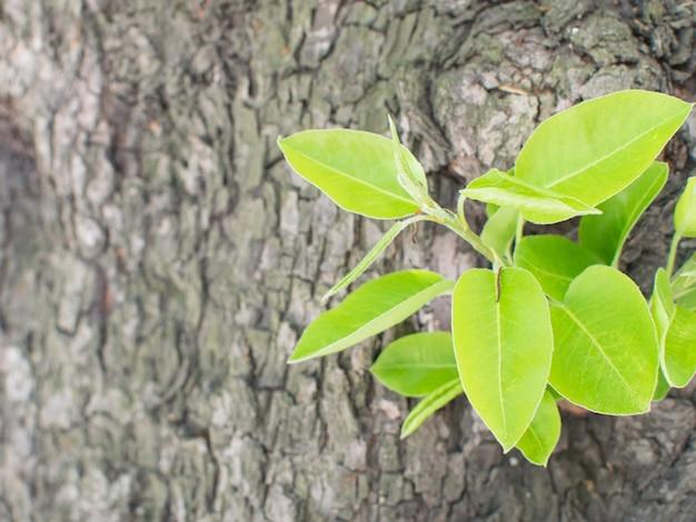 Écorce d'arbre ancien naturel avec jeune plante verte. printemps et nouveau concept de vie
