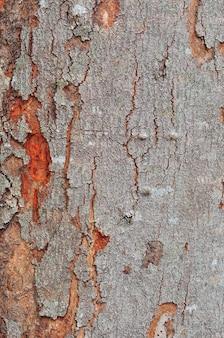 Écorce d'arbre en arrière-plan