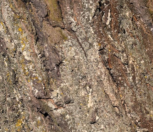L'écorce d'un arbre avec les caractéristiques de sa structure