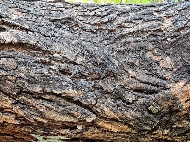 Écorce d'arbre closeup texture et fond