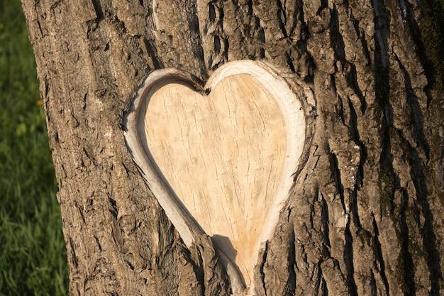 Écorce d'arbre en forme de foyer