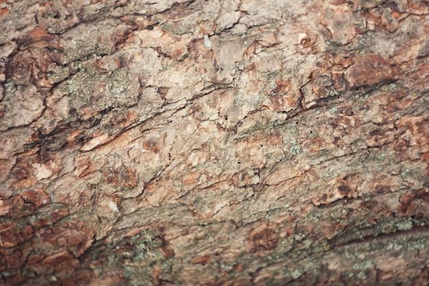 Écorce d'arbre avec de la mousse