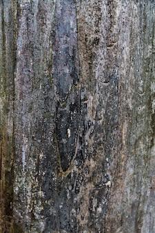 Écorce de bois d'aspect rugueux