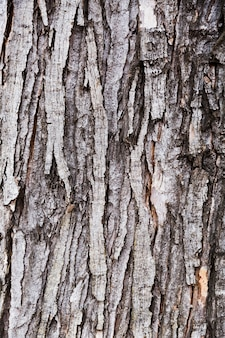 Écorce de bois à l'aspect vieilli