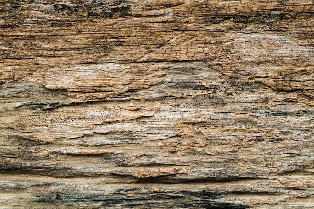 Écorce bois texture brute