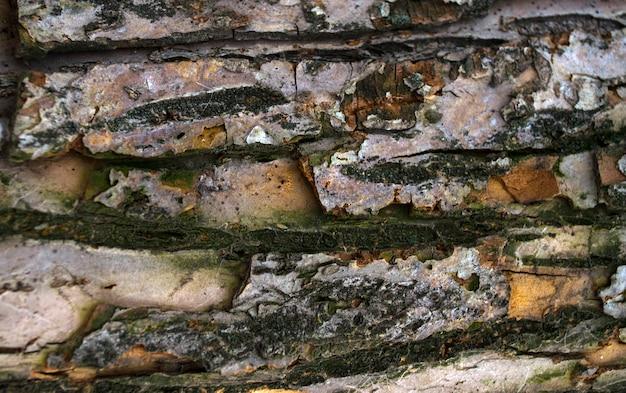 Écorce de bois de texture pour le fond ou les éclaboussures