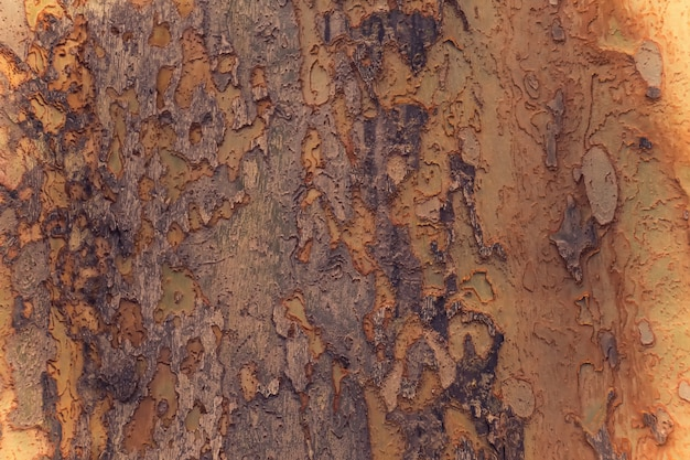 Écorce de fond d'arbre