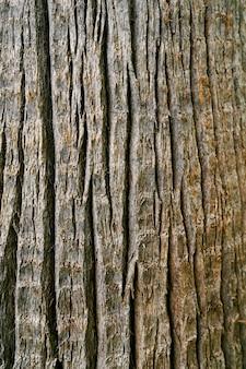 Écorce grise d'un gros plan d'arbre