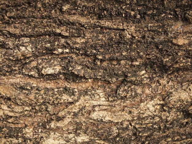 Écorce d'orme. texture mosaïque sans couture