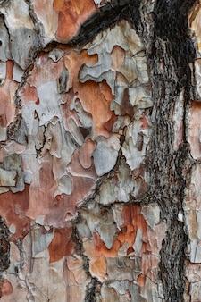 Écorce de pin avec traces de feu