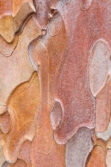 Écorce tachetée grossière de vieux pin de crimée