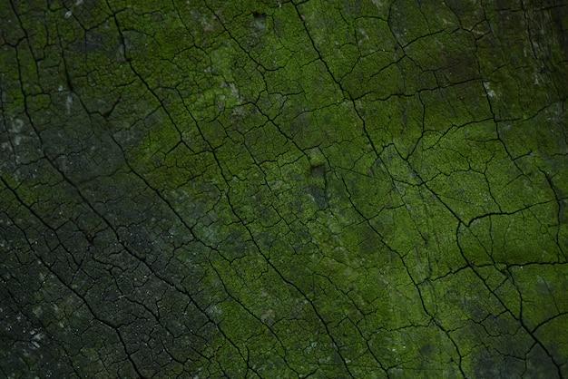 Écorce verte d'un vieux chêne se bouchent.