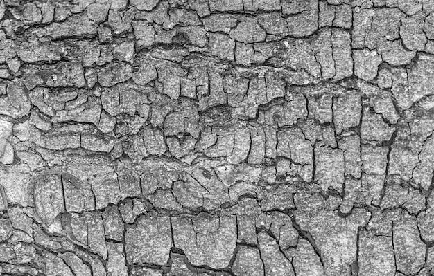 Écorce de vieux fond de texture grand arbre