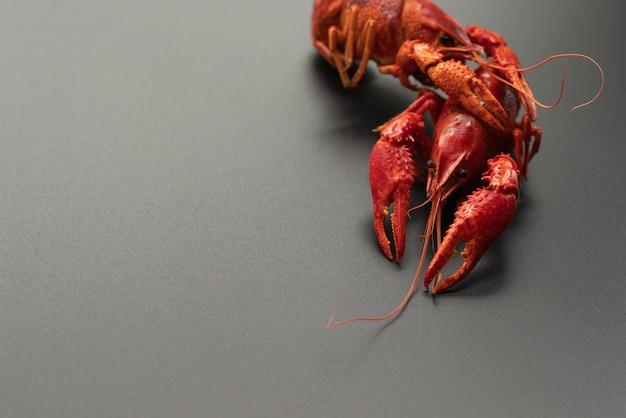 Écrevisses rouges, portrait de bébé homard sur fond noir
