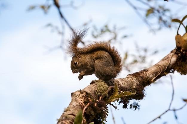 Écureuil arboricole mangeant dans une branche
