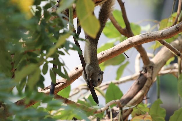 Écureuil, arbre, manger, noix, faune, joli, animal, fond, nature