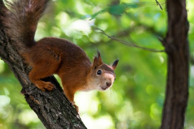 Écureuil sur l'arbre